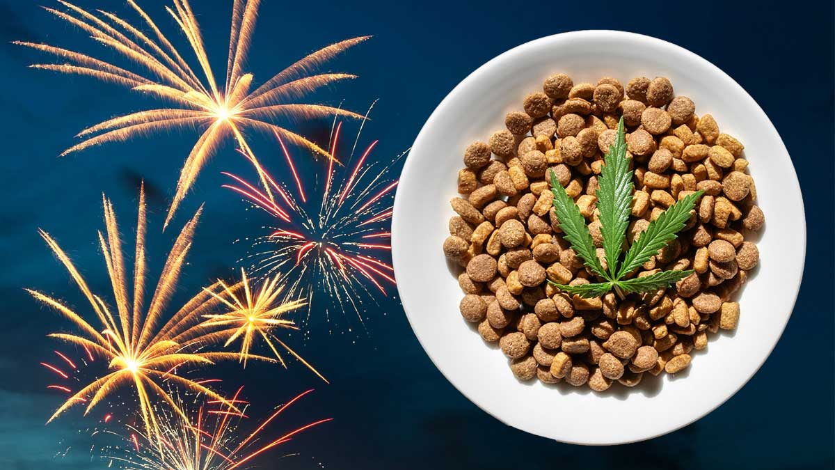 Can CBD protect your dog against fireworks anxiety?