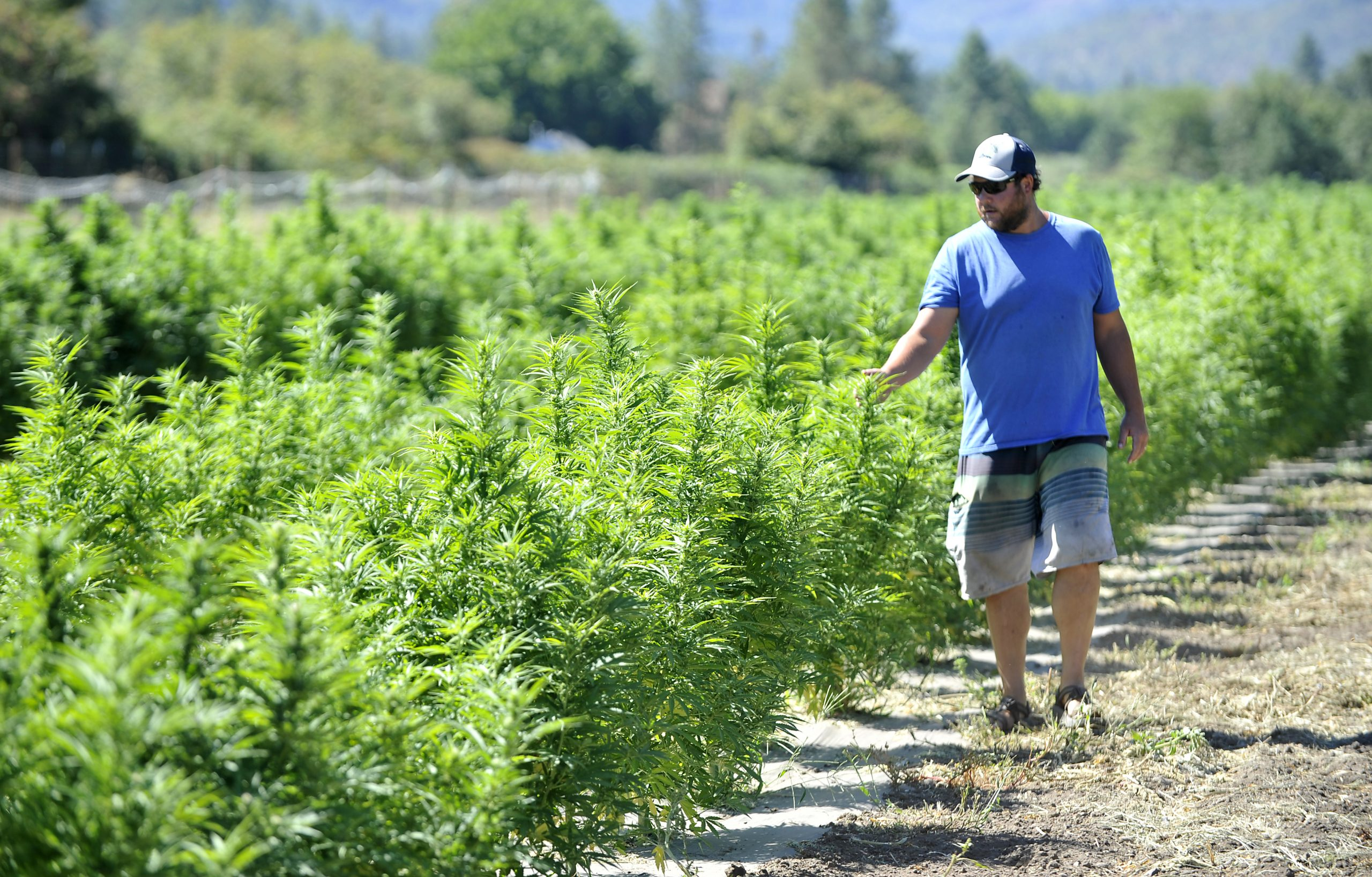 Wandering Roots Farm in Gold Hill rolls out a line of hemp tinctures